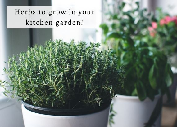 5 easiest herbs to grow in your kitchen garden