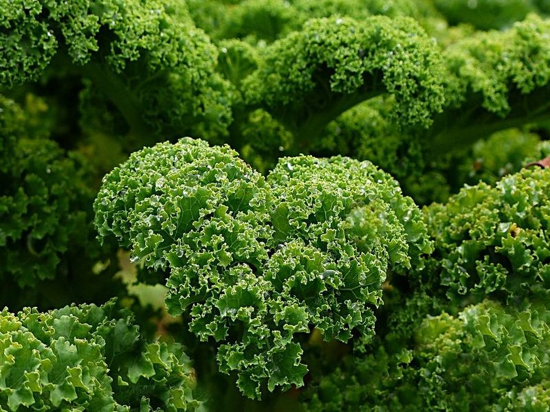 Why Kale Deserves to be on your Plate
